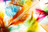 Plumes multicolores . . .