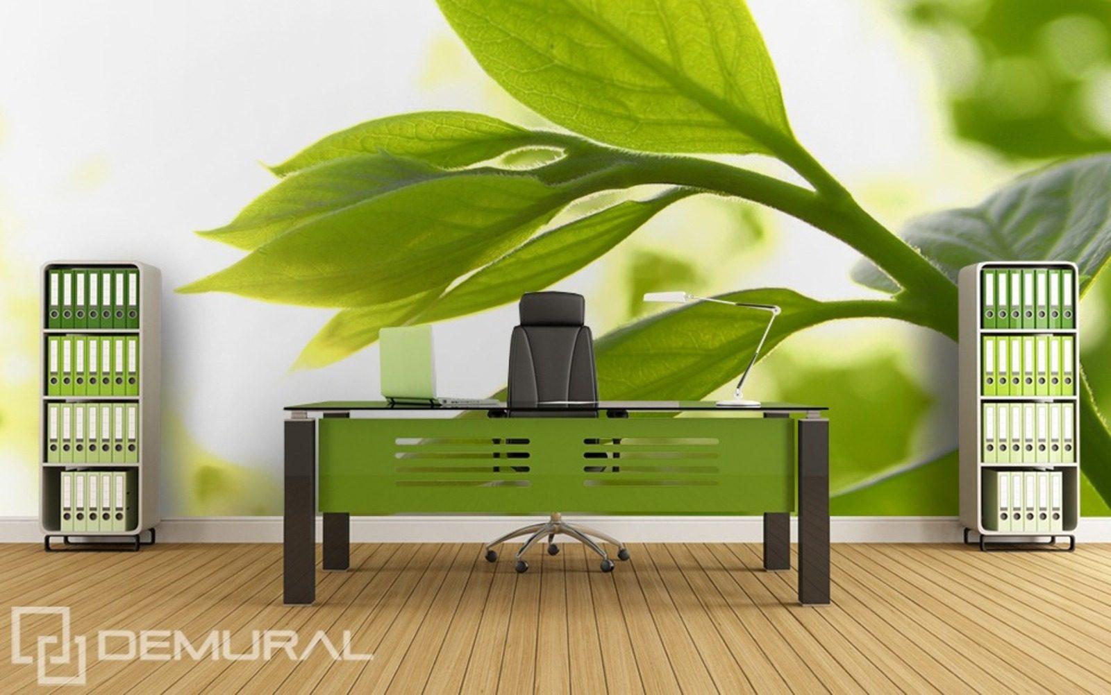 Fra cheur de la plante papiers peints pour le bureau - Petite plante de bureau ...